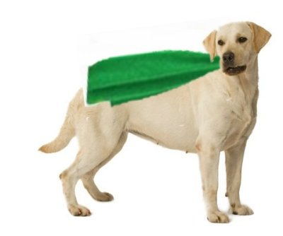 Caped Critters Hero Award: Flood Dogs