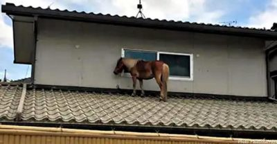 Horse on roof